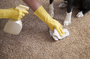 Carpet Cleaning Arncliffe