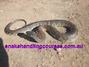 snake handling courses