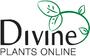 Divine Plants Online