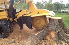 Stump Grinding North Shore