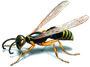 Sparkling Pest Control Beenleigh